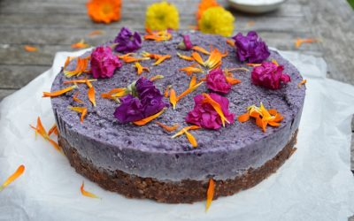 Blueberry Cake with a Nutty Cacao Base